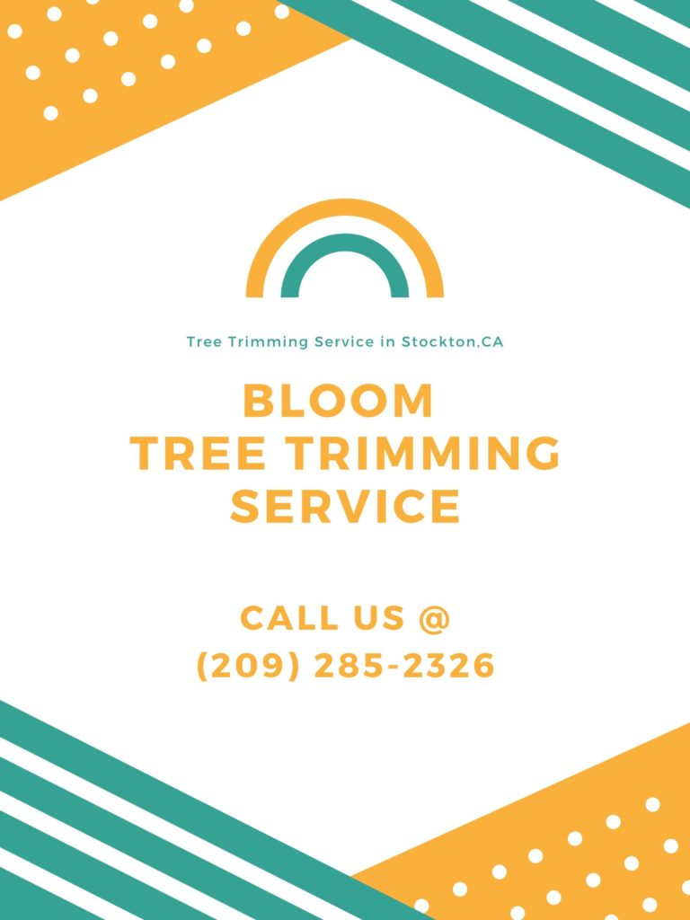 Bloom Tree Trimming Service
