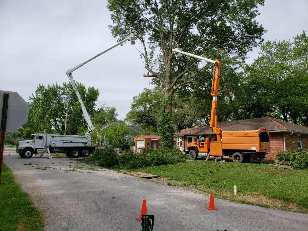 Tree Trimming Service Stockton CA