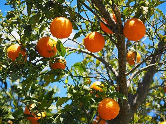 trees improve poperty value