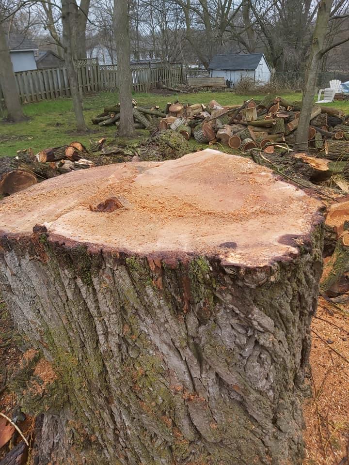 Tree Removal Service Stockton CA