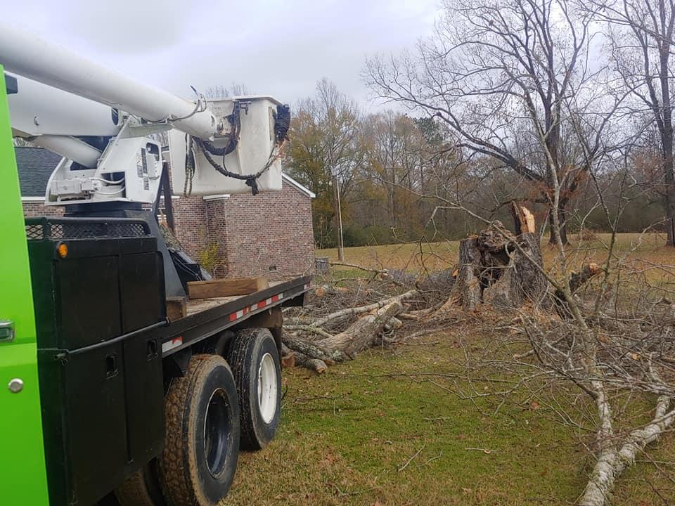 Tree Removal Service Stockton California