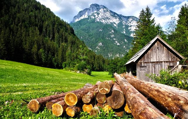 Pine Tree Trimming & Pruning